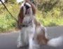 чесание воздуха у собак