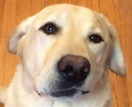 Паралич лицевого нерва у собаки